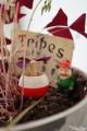 Toupie Champignon Jeux en Bois Artisanal Jouet Toupie Shop Magasin Jouets Toupies Bois Cadeau Original Noel