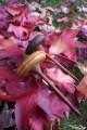 Grands Jeux Toupies en Bois de Cerisier et Noyer Collection Toupie Shop Magasin Jouet Artisanal Deco Cadeau Noel Acheter Toupie