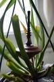 Toupie Savane en Wacapou Bois Précieux Original Collection Jeux Toupie Shop Magasin Jouets en Bois Artisanat Fabriqué en France
